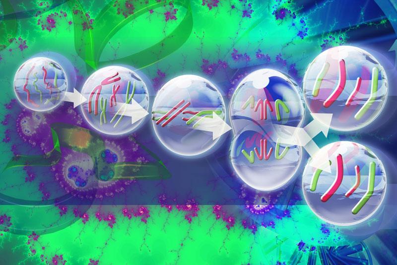 mitosi-cellulare