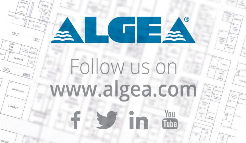 01-algea